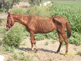 cheval abandonné
